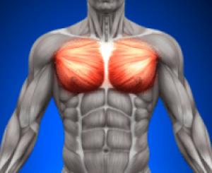 Главные упражнения для грудных мышц в домашних условиях